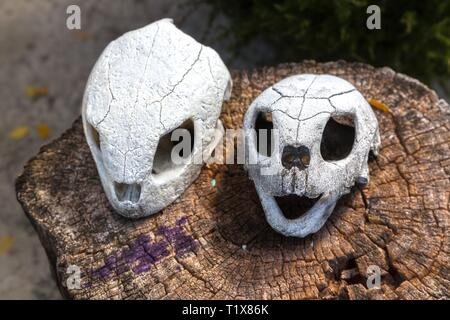 Pair of Sea Turtle Skulls on a Tree Stump in Turtle Farm Conservation and Protection Center near Cayo Largo Del Sur Marina in Cuba - Stock Image