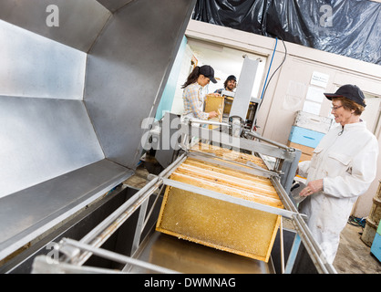 Beekeepers Extracting Honey From Machine - Stock Image