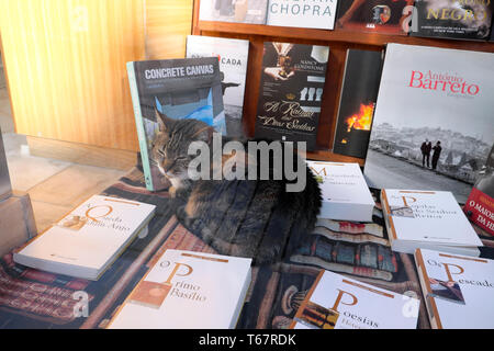 Tabby cat sitting asleep in a bookstore window selling poetry books and various international titles in Porto Portugal Europe EU  KATHY DEWITT - Stock Image