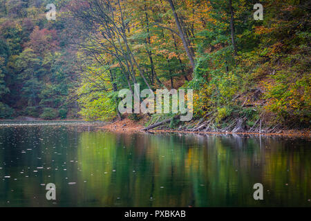 Shore of the lake during autumn, green and yellow leaves above the water - Stock Image