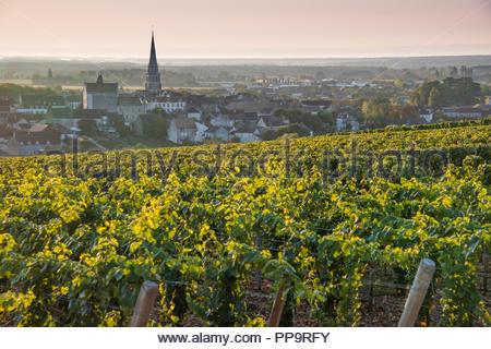 Vineyards above Meursault, Burgundy at harvest time - Stock Image