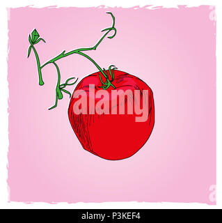 One tomato in the cluster.  illustration of food, one red tomato in the green cluster with pink background. - Stock Image