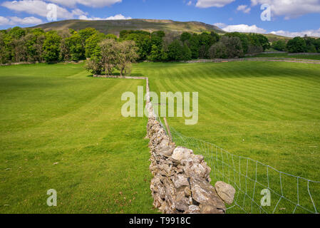 Bellow Hill. Yorkshire Dales. - Stock Image