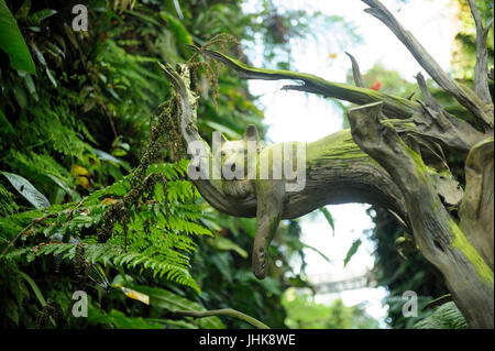 Wooden sculpture/carving of large cat in tree, in Gardens by the Bay, Singapore - Stock Image