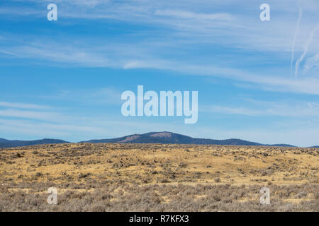 Heard of the rare Pronghorn Antelope in the wild at the California Oregon border in Modoc County. These animals are the second fastest in the world, b - Stock Image