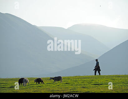 Lake District, UK. 25th July, 2017. A walker passes Herdwick sheep grazing in front of receding hills in evening light in the quintessentially English Lake District Credit: Steve Holroyd/Alamy Live News - Stock Image