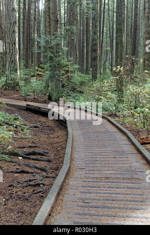 Boardwalk elevated walkway on a trail  in Pacific Spirit Regional Park, Vancouver, BC, Canada - Stock Image