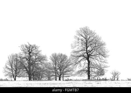 Winter landscape with trees. - Stock Image