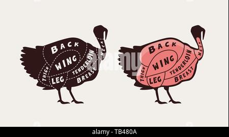 Diagram guide for cutting meat, butcher shop. Turkey vector - Stock Image