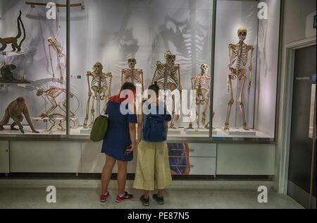 nautral history museum cambridge - Stock Image