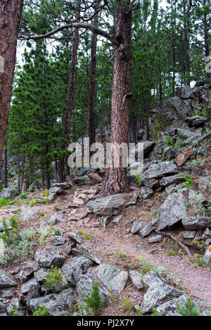 Trail Winds Up Through Forest in Wind Cave National Park - Stock Image