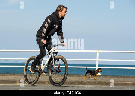 Aberystwyth Wales UK. 13 April 2019. UK Weather: A man cycling  on the promenade on a  bright snd sunny  April springtime morning with clear blue skies  but  a cold easterly wind blowing  in Aberystwyth on the Cardigan Bay coast of west Wales.