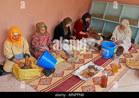 BERBER VILLAGE WOMEN SORTING SEEDS AND BERRIES, MARRAKECH, MOROCCO, MAY 2012. The tradition of village women selecting and sorting seeds and berries f - Stock Image