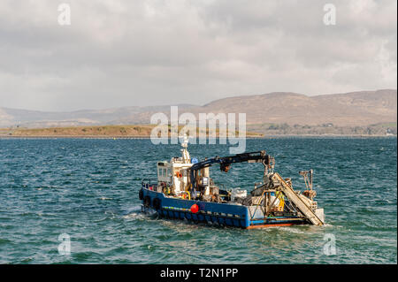 Bantry, West Cork, Ireland. 3rd Apr, 2019. A Bantry based fishing boat departs Bantry Harbour for the Mussel fishing grounds in the bay. The day has started bright but with strong northerly winds. This afternoon will see prolonged showers with highs of 6 to 9°C. Credit: Andy Gibson/Alamy Live News. - Stock Image
