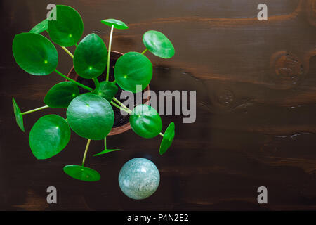 Green Aventurine Sphere with Pilea Plant on Dark Table. Includes Space for Copy. - Stock Image