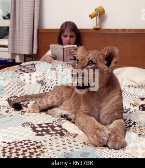 Tame lion cub in bedroom - Stock Image