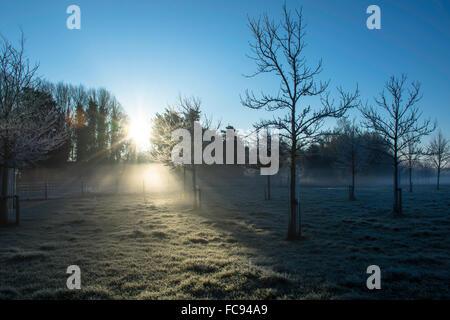 Winter Sunrise Across a Field - Stock Image