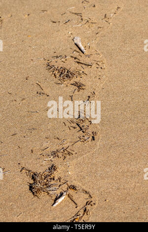 Plastic pieces washed up from the Atlantic Ocean sand beach shoreline in Agadir, Morocco - Stock Image