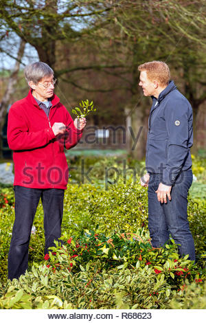 Tenbury Wells, Worcestershire, UK. 4th Dec 2018. Mistletoe for sale by auction at Tenbury Wells, Worcestershire, UK. Adam Henson & Countryfile were there filming. - Stock Image