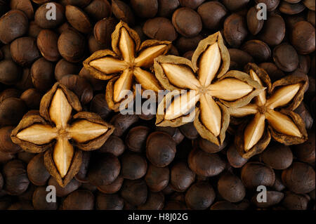 dried sacha inchi on roasted sacha inchi seeds background - Stock Image