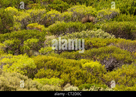Cape Naturaliste coastal vegetation, Western Australia - Stock Image