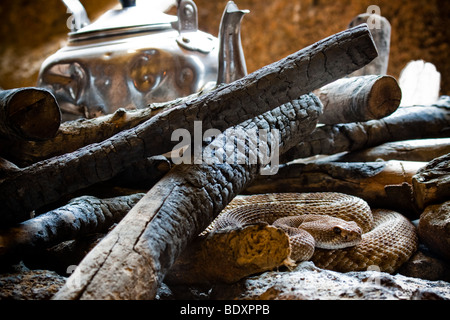 Rattlesnake by campfire - Stock Image