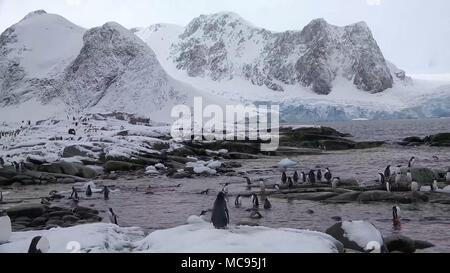 Emperor Penguin colony at Snow Hill in Antarctica. - Stock Image