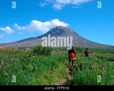 Volcanologist walk through wildflowers fields around the cone of the Augustine volcano on Augustine Island in the - Stock Image