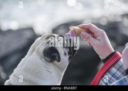 Dog eating ice cream with owner on a rock overlooking the sea - Stock Image