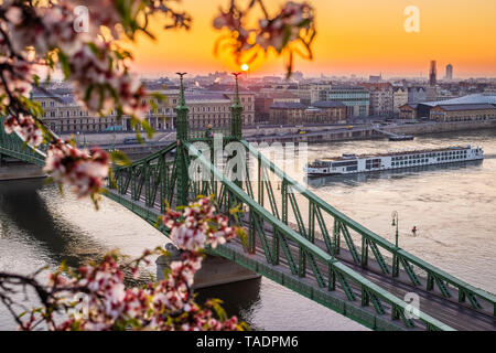 Budapest, Hungary - Beautiful spring sunrise at Liberty Bridge with cruise ship on River Danube and Cherry Blossom at foreground - Stock Image