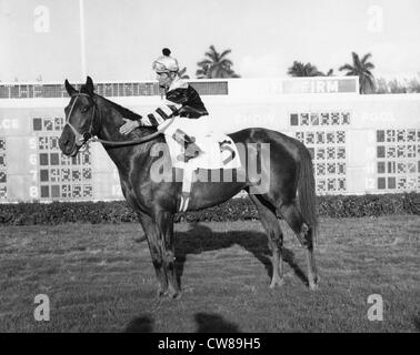 Seattle Slew, Hialeah Racetrack, Florida,1977 - Stock Image