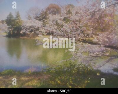 Lovely pond in Spring with white cherry blossoms. Vintage, painterly textures overlay and soft blur for a dreamy, - Stock Image