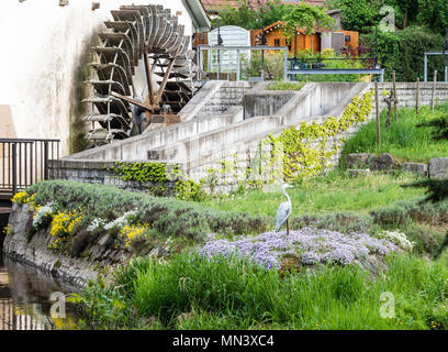 Old mill wheel, near Freiburg, Breisgau, Baden-Würtemberg, Germany - Stock Image