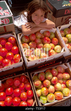 Florida Hillsborough County Plant City Mexican migrant child helps family sell locally grown tomatos - Stock Image