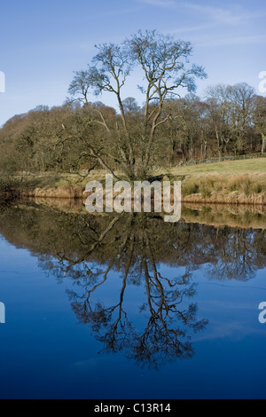 Alder tree reflected in the River Cree - Stock Image