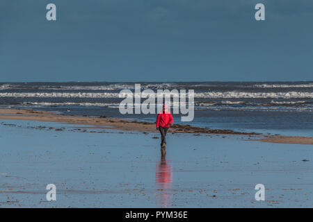 A lone walker wearing a bright red winter coat on the beach at Alnmouth Northumberland on a cold windy winter day with bright sunshine and rough sea - Stock Image