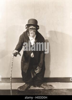 Monkey dressed in tight overcoat and bowler hat - Stock Image