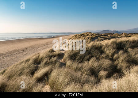 The empty beach at Harlech, Gwynedd, north Wales, UK, backed by sand dunes with views of the Irish Sea and the Llŷn Peninsula - Stock Image