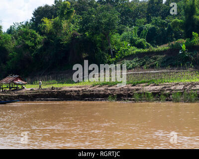 Crops growing in fertile soil at side of mighty Mekong River Luang Prabang Laos Asia signs of riverbank erosion - Stock Image