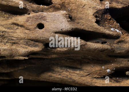 Extreme closeup of a piece of driftwood found on the beach at Fort Morgan, Alabama, USA. - Stock Image