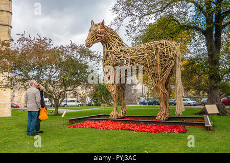 The Canterbury War Horse,To commemorate the centenary of the end of The First World War, students and staff from Canterbury School of Visual Arts at C - Stock Image