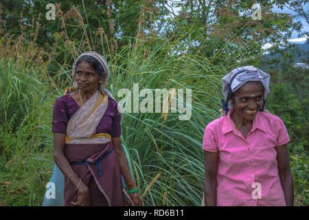 Sri Lanka tea pickers - Stock Image