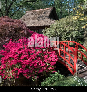 The Japanese garden (Japanse Tuin) in spring (May), Clingendael Park, The Hague (Den Haag), Netherlands. - Stock Image