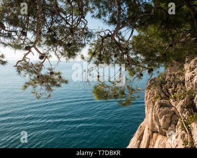 Scenic pine tree and rocky coastline with blue sea background in Makarska riviera - Stock Image
