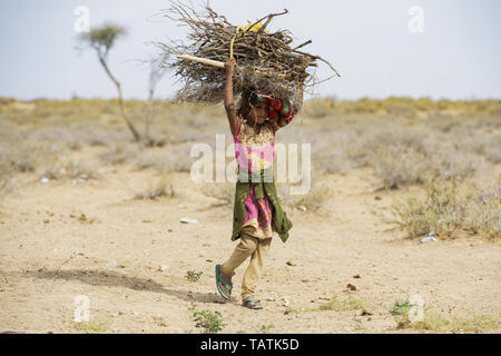 A poor and young girl is carrying heavy bunches of dry wood on her head in the middle of the Thar Desert. - Stock Image