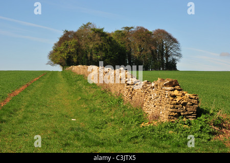 Dry stone wall in fields near Lower Slaughter, Gloucestershire - Stock Image