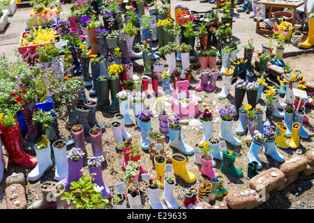 Garden Made from Wellington Boots with Plants - Stock Image