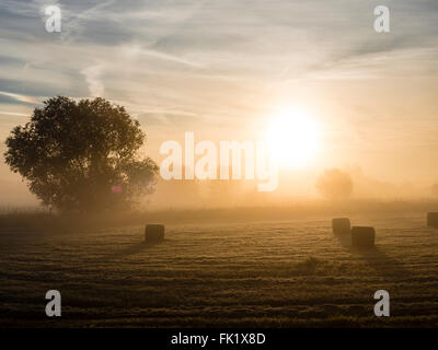 Fog about the meadows along the Aller river, Celle, Germany - Stock Image