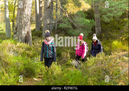 Walkers on the viewpoint trail in Glen Affric, Highlands, Scotland. - Stock Image