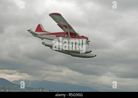 A de Havilland DHC2 Beaver floatplane making its approach to the waterways of Vancouver city Harbour in BC Canada. - Stock Image
